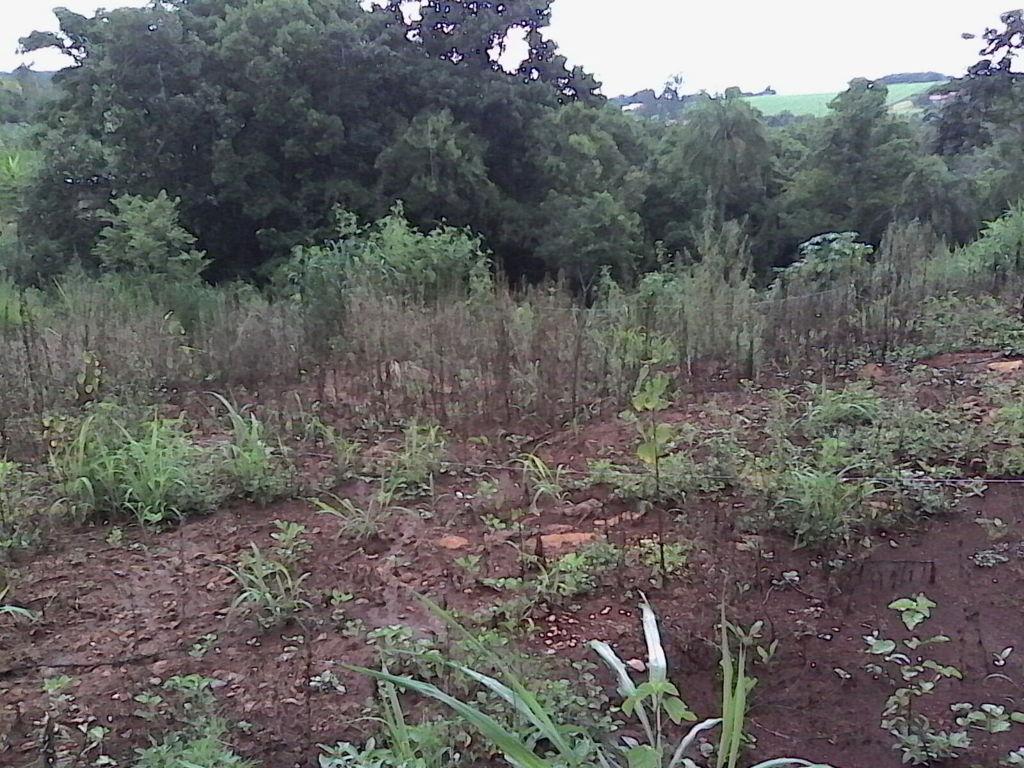 Fazenda Itaúna
